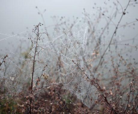 Winter Morning (by [otchipotchi])