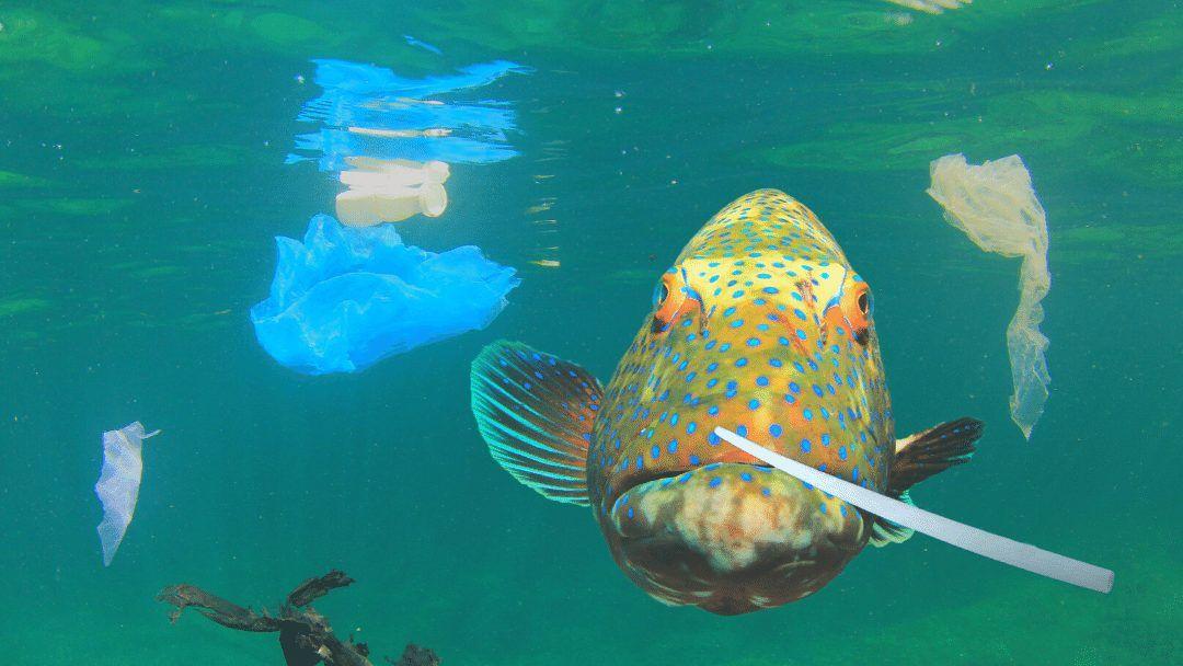 #critterrfacts #plastics #sealife #conservation #ocean #sea #wildlife #oceanlife #marinelife #microplastic #saynotoplastic