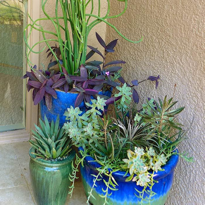 Blue Green Pottery Containers Succulent Plants Slipper Plant