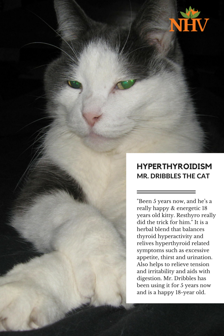 Natural Remedy For Hyperthyroid Troubles In Cats Cat