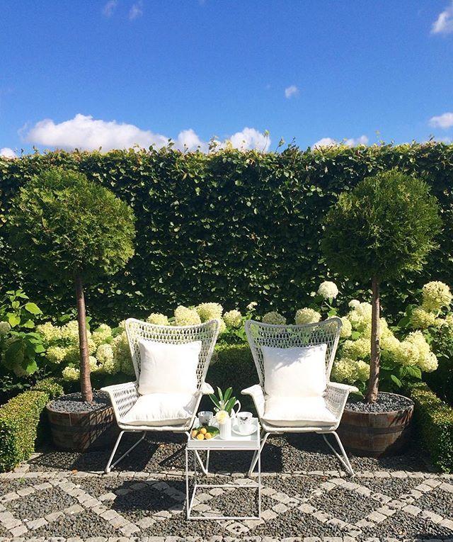 symmetry  #mygarden #thuja #hydrangea #annabelle #instagardenlovers #haven #minhave #tuin #garten #hage #trädgård #jardin #photooftheday #gardenlove #royalcopenhagen