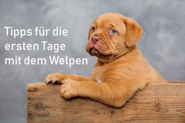 4 Tipps Wie Dein Hund Dir Auf Den Spaziergangen Mehr Aufmerksamkeit Schenkt Off Leash De In 2020 Hunde Welpen Erziehung Welpen Hunde Welpen