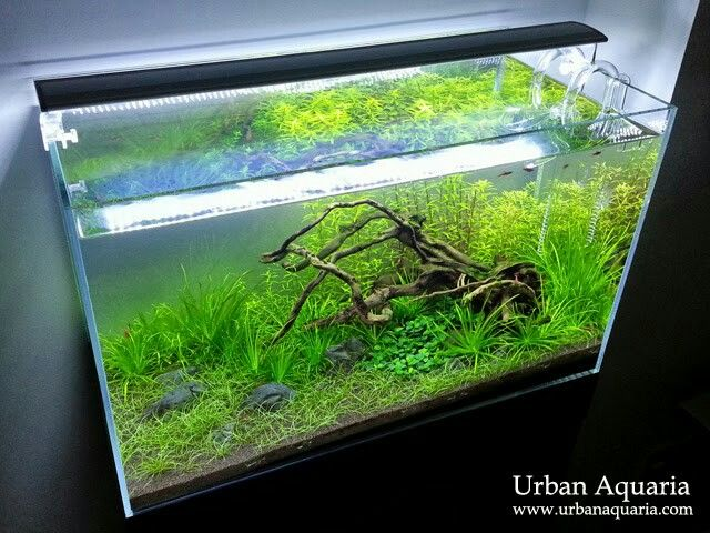 Driftwood tank