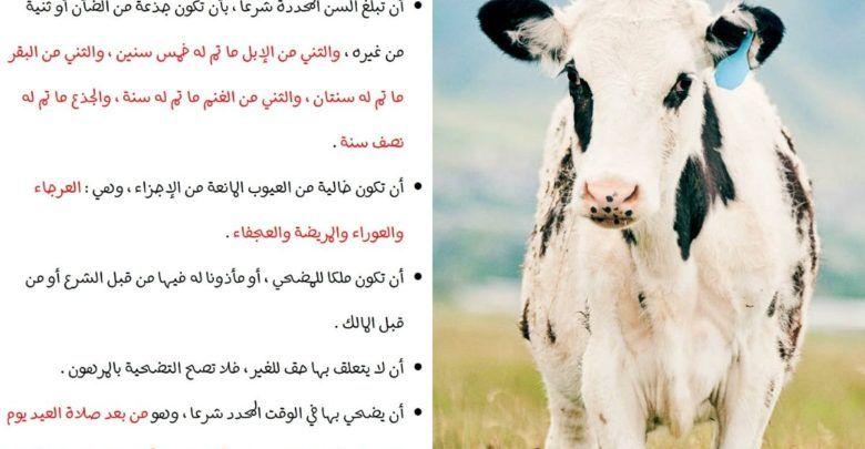 شروط الأضحية وأحكامها Horses Animals Cow