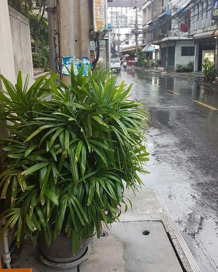 #شبكة_أجواء : #تايلاند : أمطار #بانكوك الآن من #الزميل_بو_وضحى . @g.s.chasers