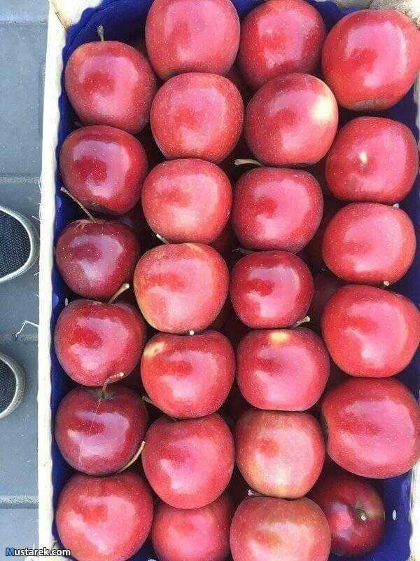 تصدير جميع انواع الخضار والفواكة الفريش والمجمدة اميديانا جروب للاستيراد والتصدير والتوكيلات التجاريه على اتم الاستعداد لتصديرواستيراد Fruit Food Plum