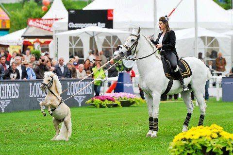 #horses.  Mini and Mighty