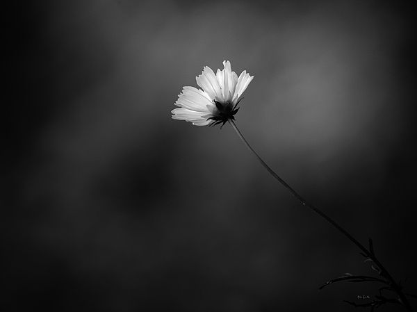 Image result for alone black and white