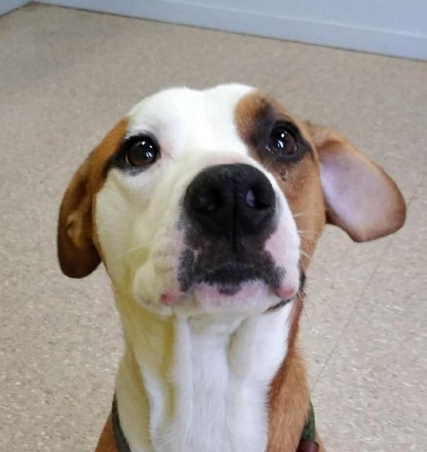 Adopt Chance On Horses Dogs Animal Shelter Horses