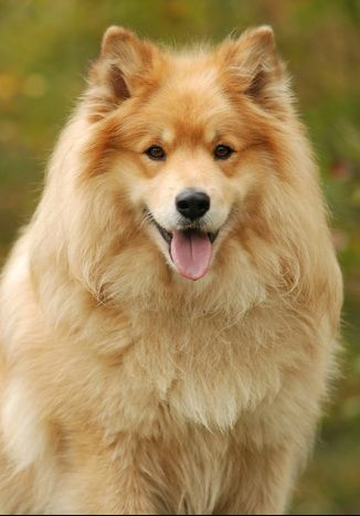 So Beautiful Dog Expressions Dog Breeds Snow Dogs
