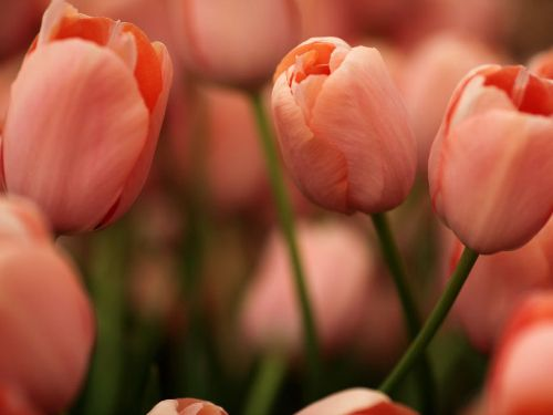 What Your Favorite Flower Says About You - Flower Meanings - Good Housekeeping