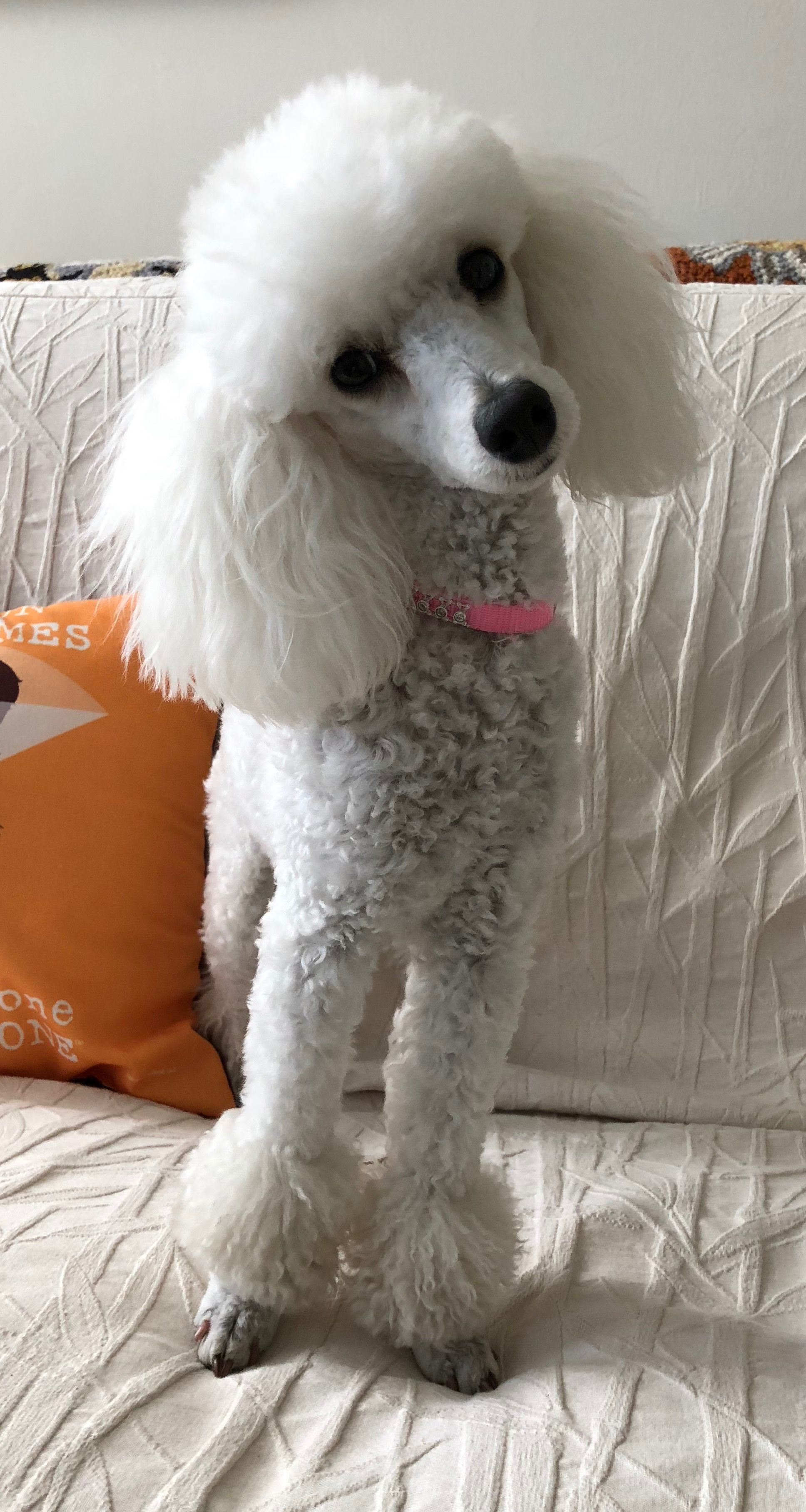 Would Anyone Like To Take Me For A Walk Jolie May 2 2018