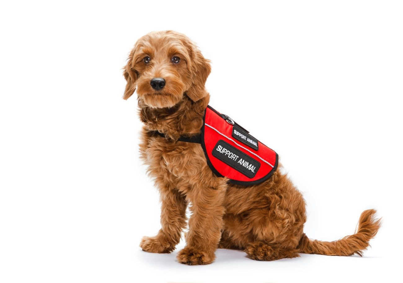 Latest Update Focuses On Reasonable Accommodation Distinction In Fair Housing Act Emotional Support Dog Service Dog Training Service Dogs