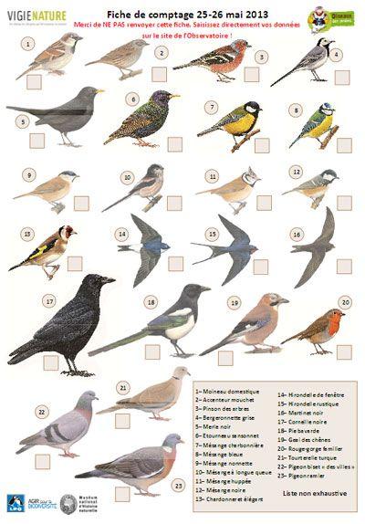 Paris comptez les oiseaux des jardins 25 et 26 mai for Oiseaux des jardins belgique