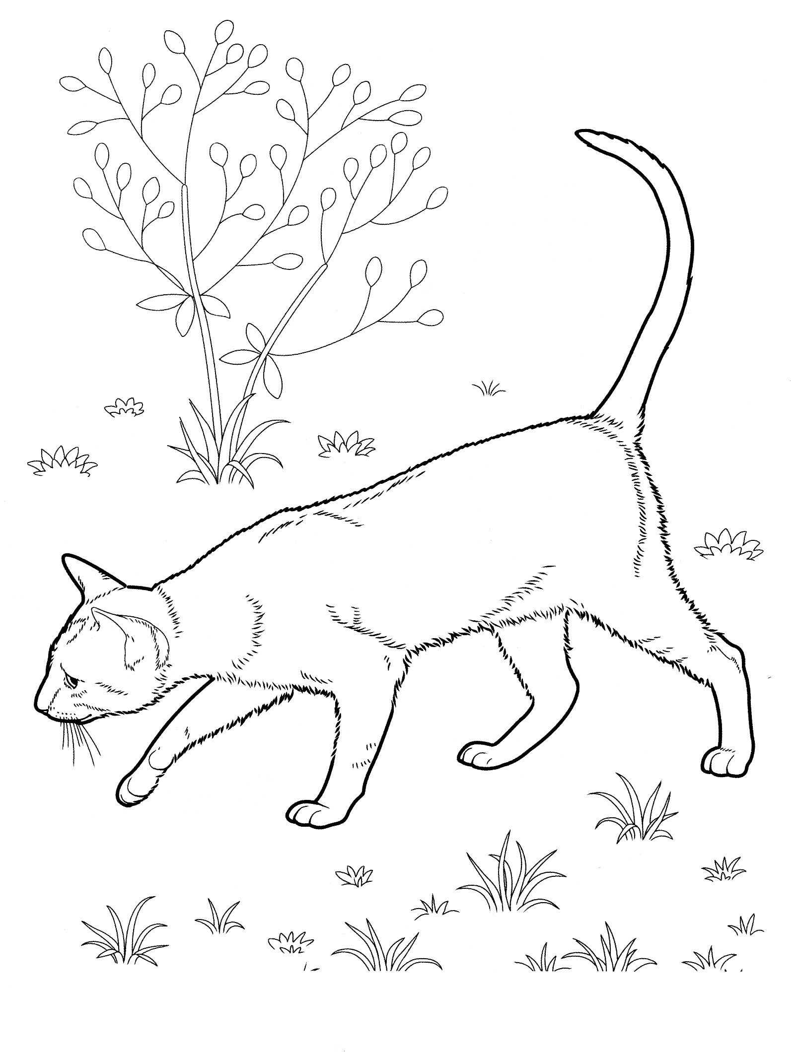 Cat 31 Cats Coloring Pages For Teens And Adults Cat Coloring Page Cat Coloring Book Free Coloring Pages