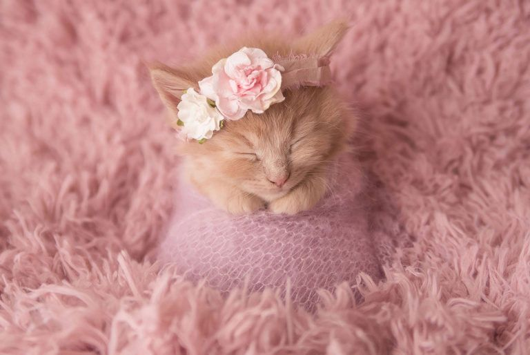 Flowers In Her Hair Newborn Kittens Kittens Cutest Kittens Funny
