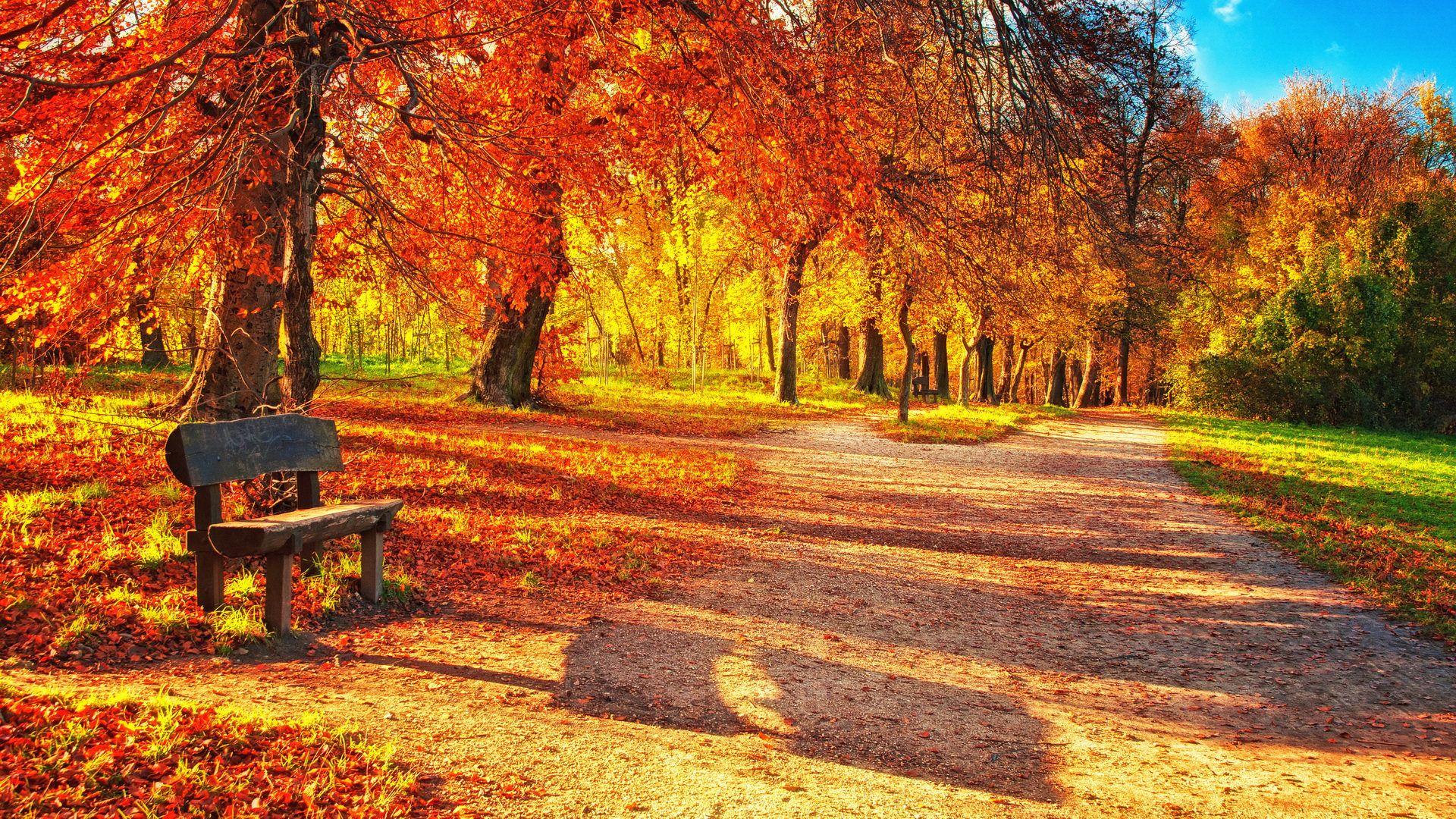 Autumn Leaves Desktop Background Wallpaper High Resolution