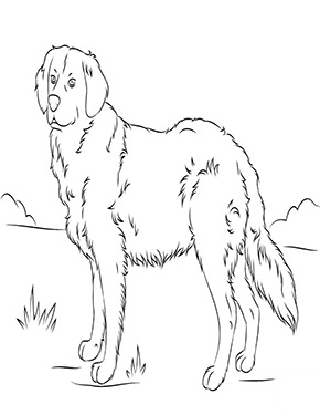 Ausmalbild Golden Retriever Dog Coloring Page Golden Retriever Colors Puppy Coloring Pages