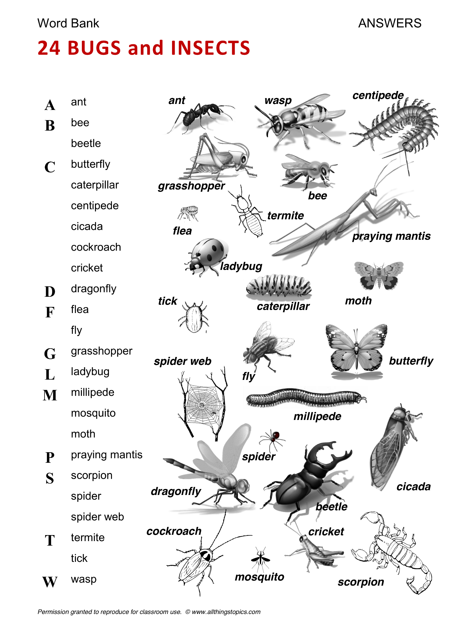 Bugs and Insects, English, Learning English, Vocabulary