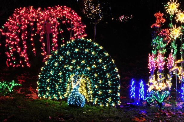 The Dazzling Light Displays Of Bellevue Botanical Garden D Lights And The Christmas Ship Festival Bell Christmas Ships Christmas Light Displays Light Display
