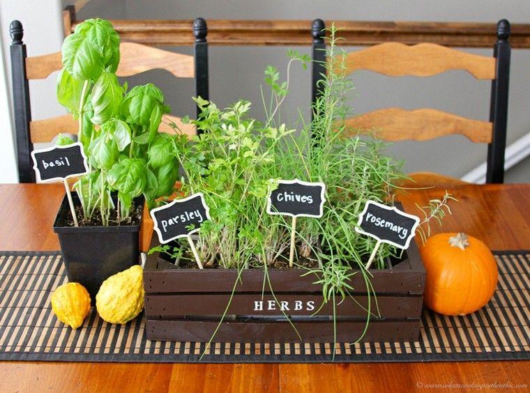 Especias naturales cultivadas en macetas de interior - Vitaminas para plantas de interior ...