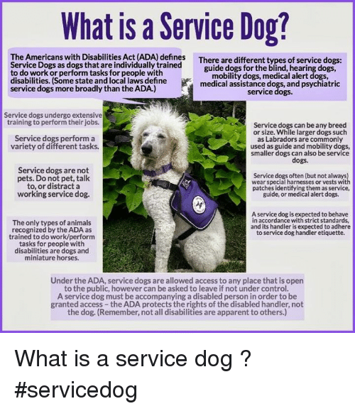 What Is A Service Dog The Americans With Disabilities Act Ada Defines Service Dogs As Dogs That Are Indivi Service Dogs Service Animal Psychiatric Service Dog