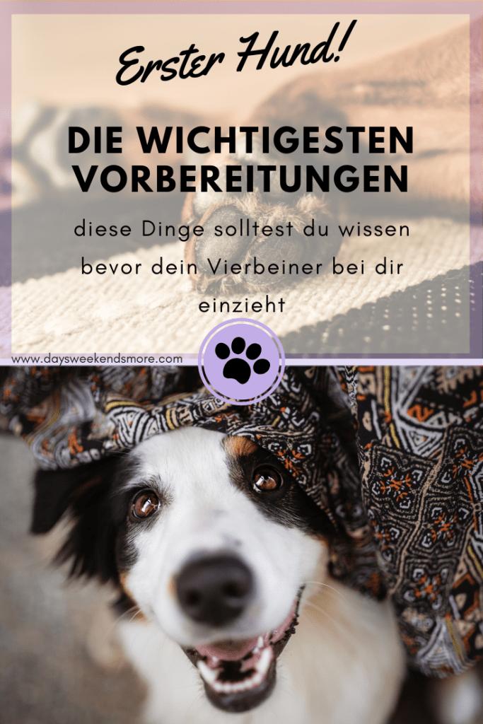Mein Erster Hund Zieht Ein Die Wichtigsten Vorbereitungen Hunde Tierheim Hunde Hunde Erziehen