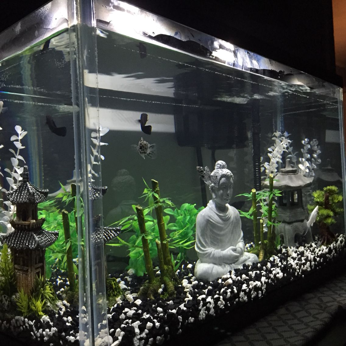 Molly fishes in buddha aquarium fish tank pinterest for Fish decoration ideas