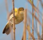 Bird Species in Setubal   photos