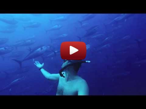 Swimming With Tunas In Malta Diving Malta Swimm Tuna Video Watch Funny Videos Funny Gif Malta