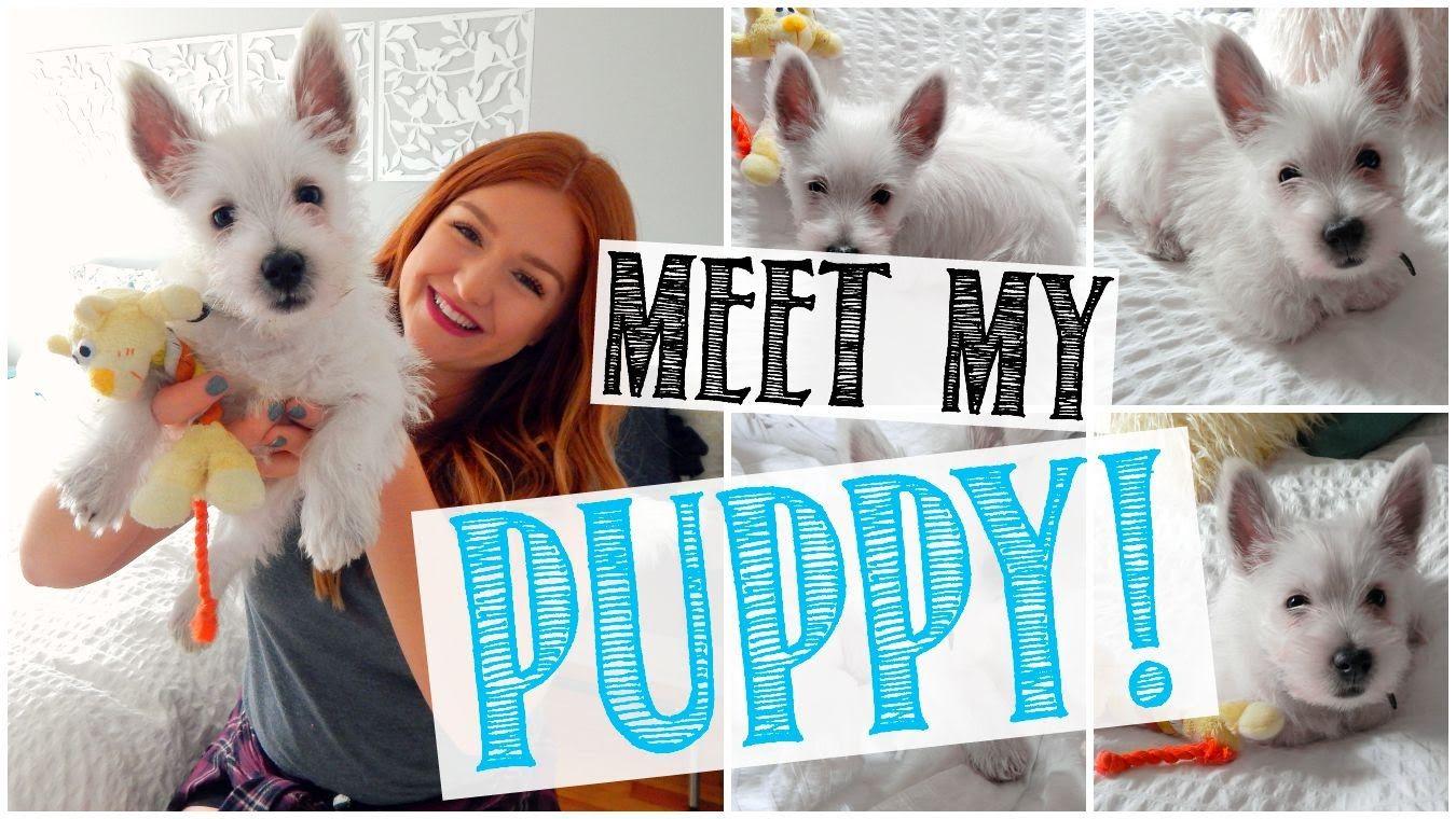 I Got A Puppy Puppy Haul Puppy Pinterest Puppies Puppies