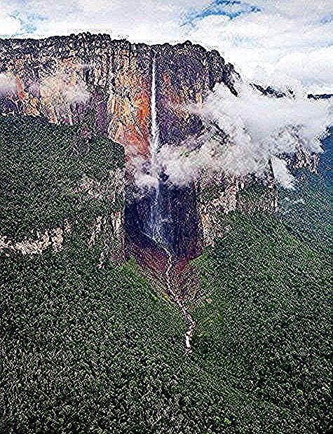 AmazonasRegenwald Brasilien  Jungle Amazonas