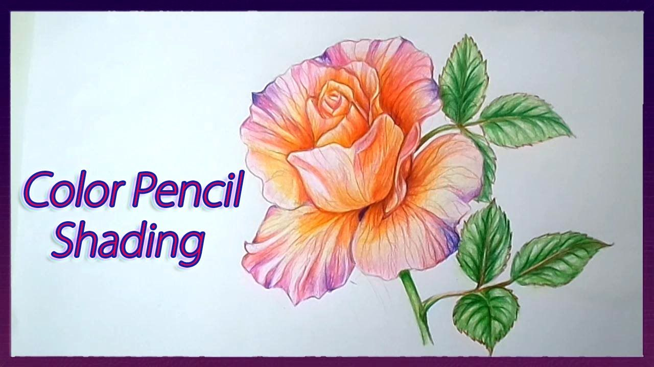 Realistic Color Pencil Shading Tutorial of Rose Flowers ...