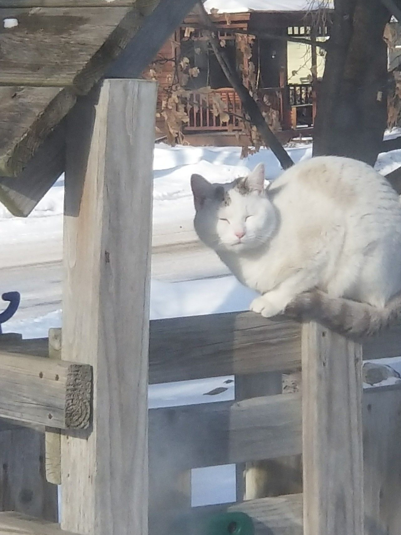 Cat Outside My House Today He Was Shivering So I Let Him In My Heated Garage For A Bit And Gave Him Food By Kingkiller Cats Outside Pretty Cats Cats