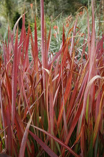Ornamental Grasses Zone 7 Ornamental grasses zone 7 dont fool with mother nature ornamental grasses zone 7 workwithnaturefo