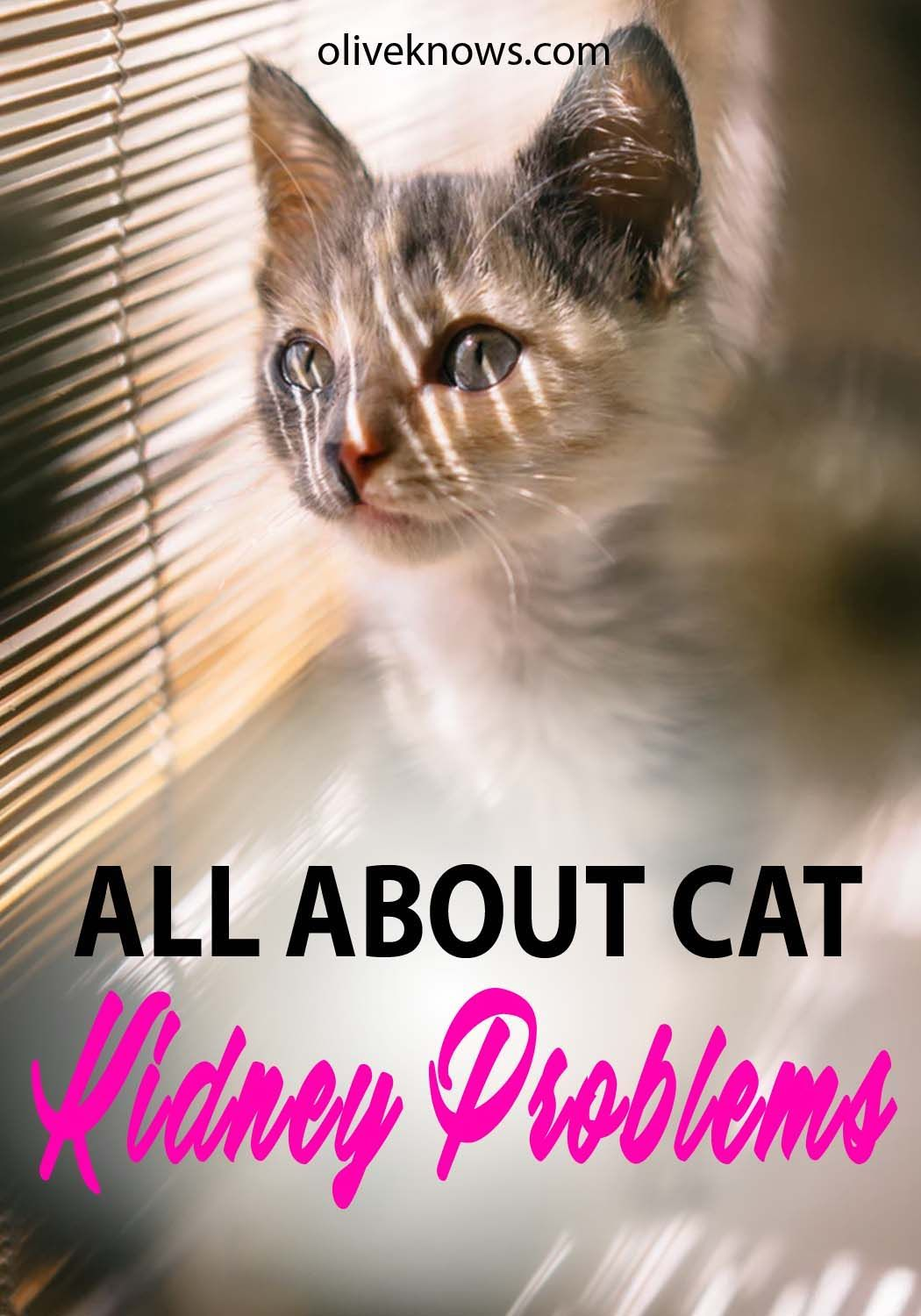 All About Cat Kidney Problems Cats, Cat kidney, Cat health