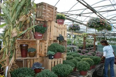 Idea Tulip Crates Garden Center Ideas Materials Flowerland