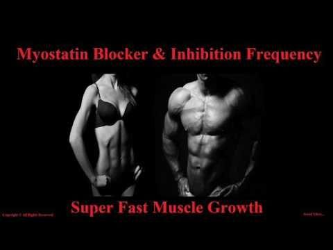 Extreme Body Building Frequency - Myostatin Inhibitor