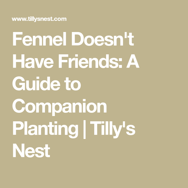 Fennel Doesn T Have Friends A Guide To Companion Planting 400 x 300
