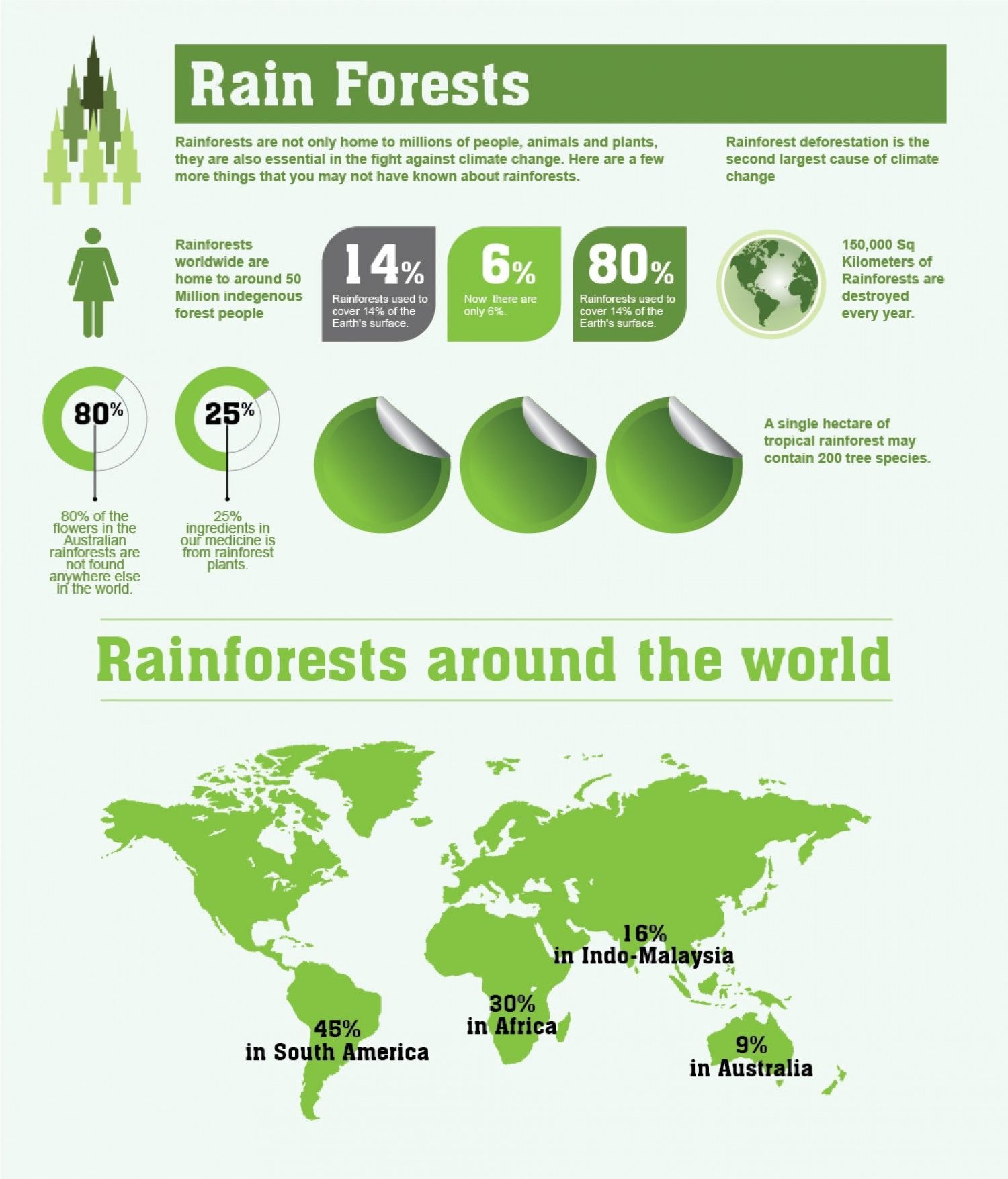 Rainforests Facts And Figures Infographic Rainforest Facts