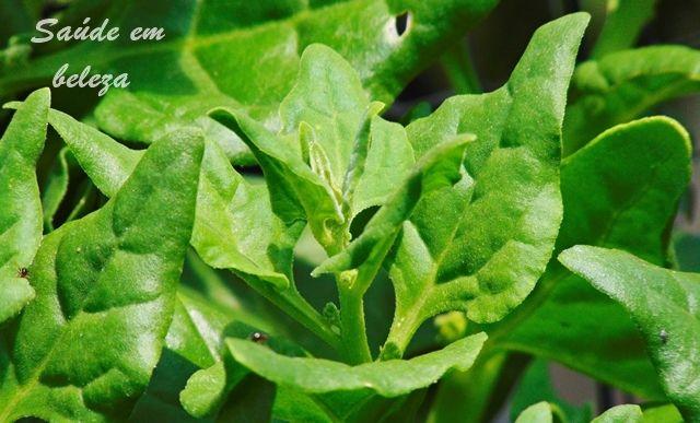 Saúde em beleza: Benefícios espinafre saude