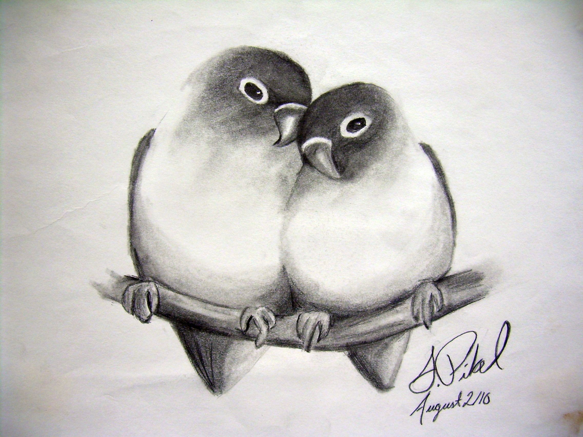 Love birds by pikels2 deviantart com on deviantart animal drawings bird drawings