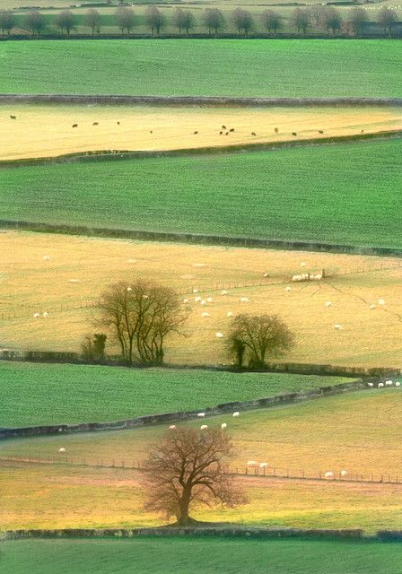 Fields from Grey Hill Common towards the Severn, Gwent   Flickr - Photo Sharing!