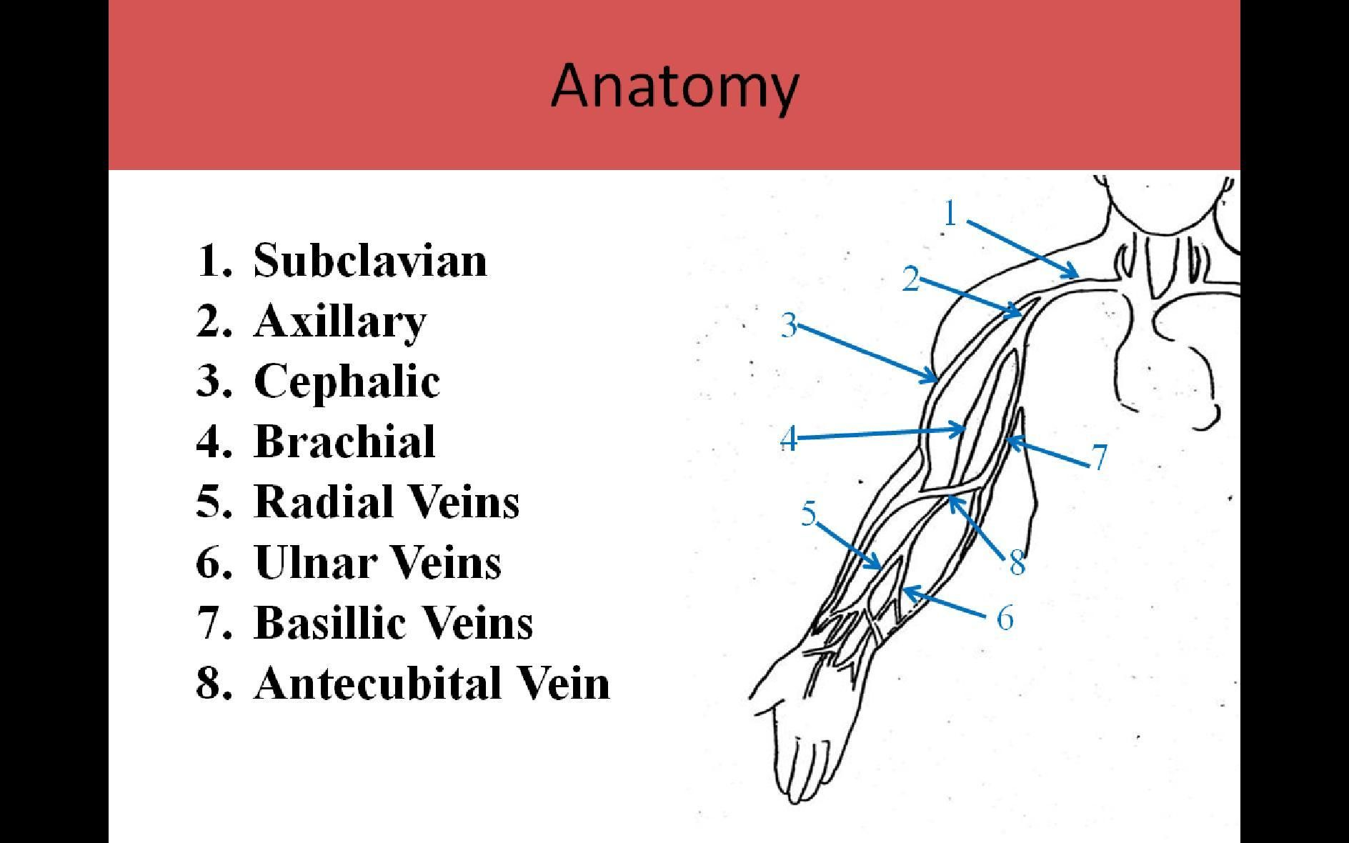 Extremity Venous Pg1 | vascular | Pinterest | Paediatric nursing ...