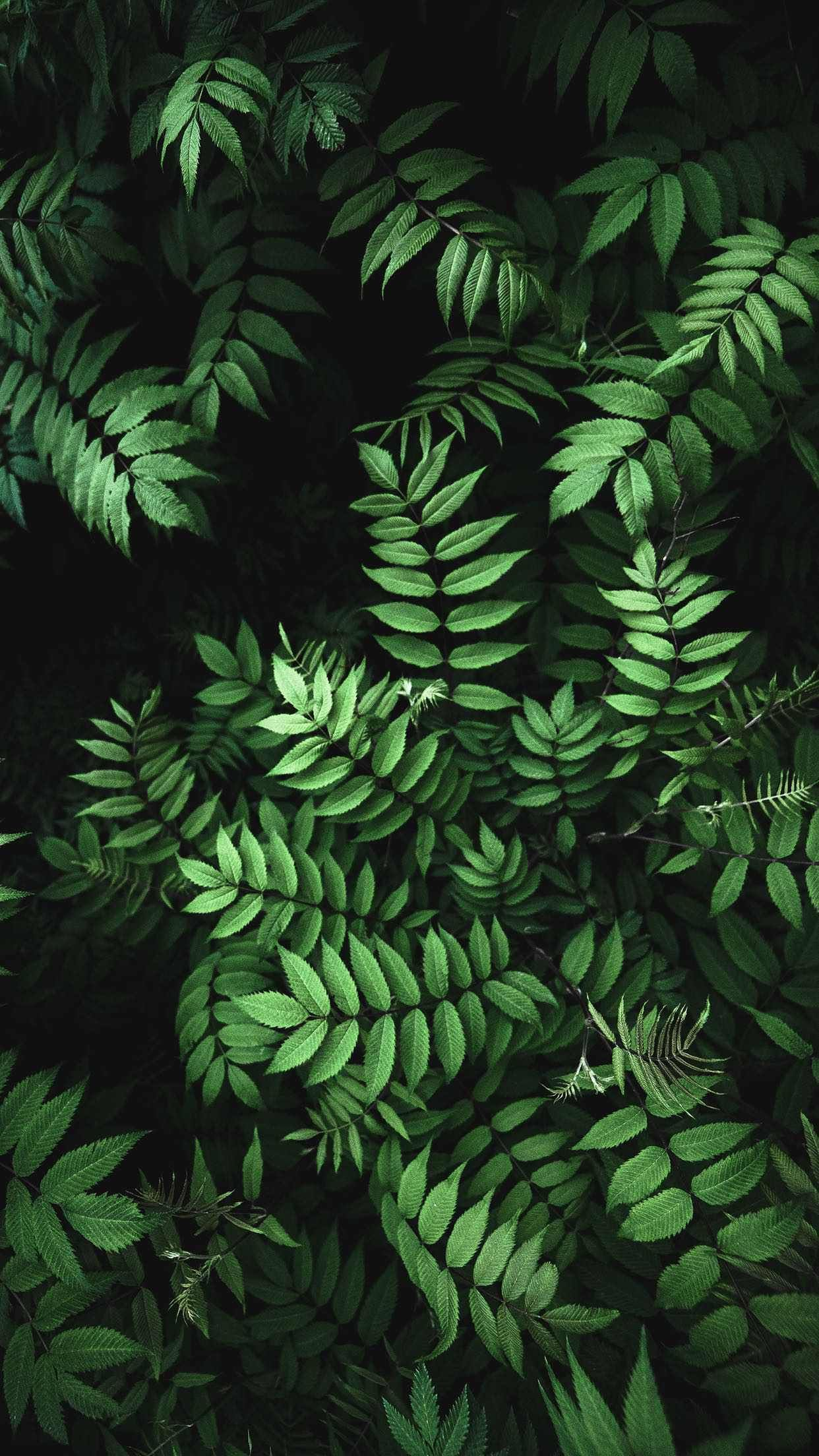 Iphone 8 Wallpaper In 2019 Green Leaf Wallpaper Fern