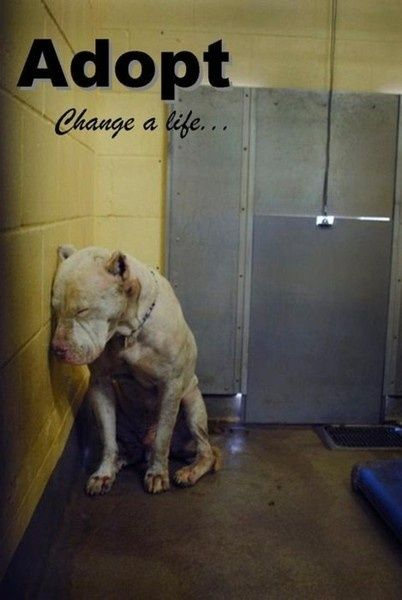 this is what our dog looked like the day we got her from the pound. so depressing in those places