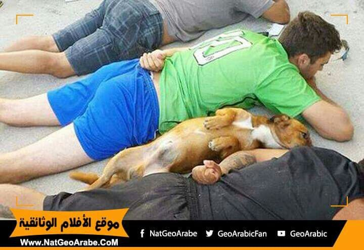 Dog is  best friend even in police  resting