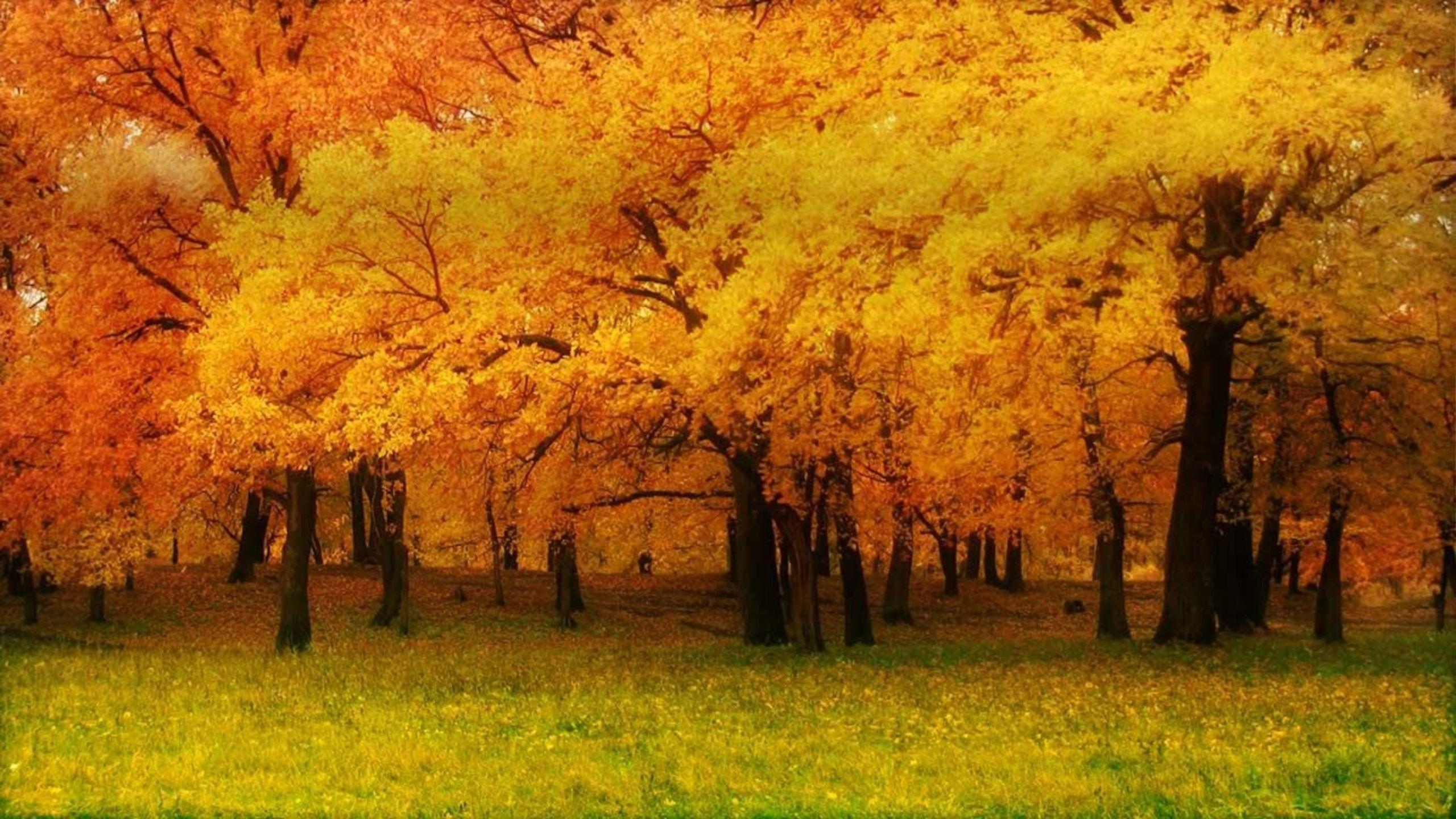 fall nature backgrounds. Wallpaper Copaci Galbeni Pentru Toamna Verde Fall Nature Backgrounds