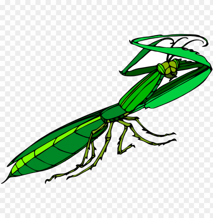 How To Set Use Cartoon Praying Mantis Icon Png Image With Transparent Background Png Free Png Images Praying Mantis Image Png Images