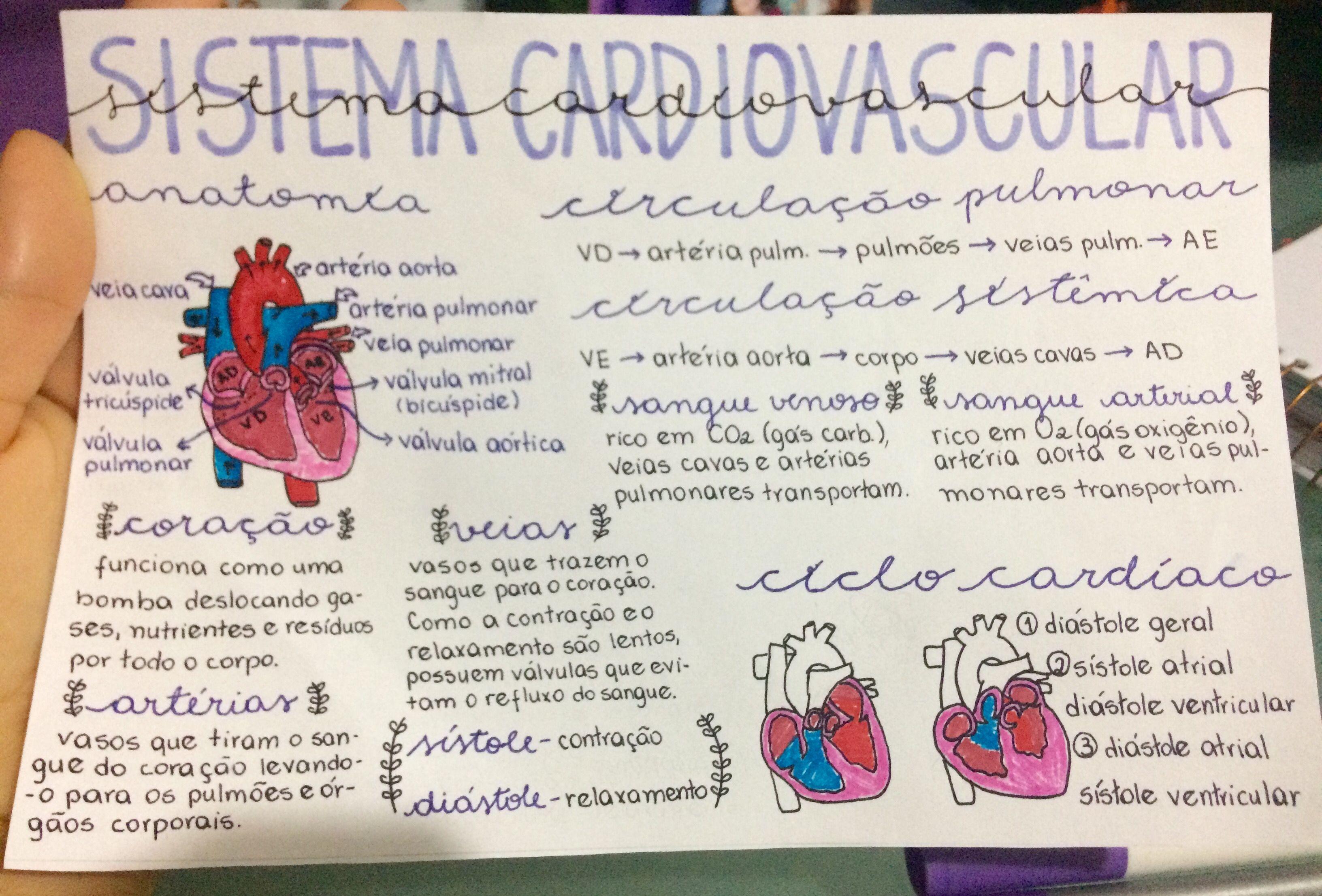 summary #resumo #biologia #sistemacardiovascular | school ...